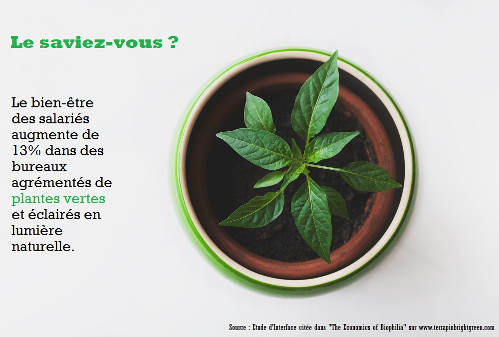 Les Bienfaits Des Plantes Vertes Au Bureau My Happy Job