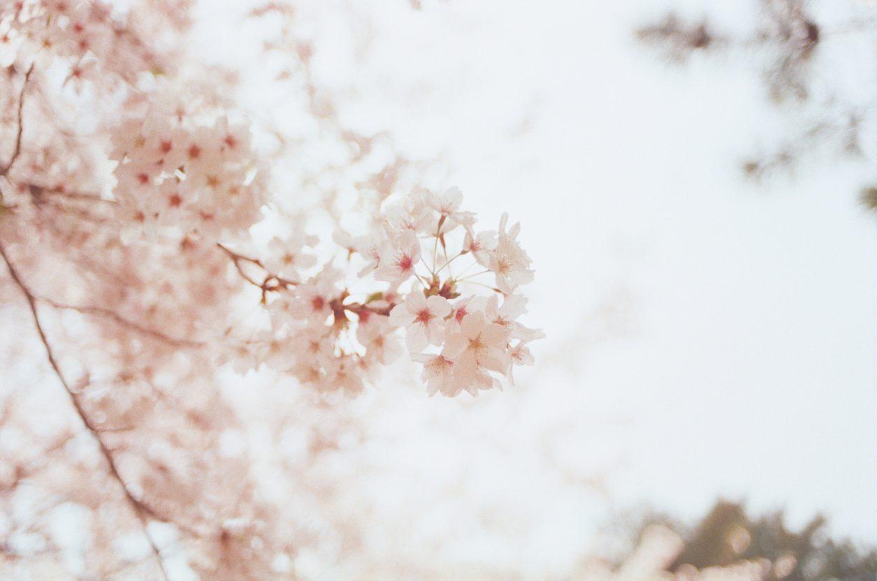 beautiful-bloom-blooming-1023953